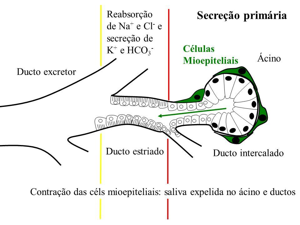 Enzima Muco Secreção salivar