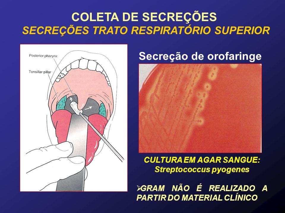 Secreção de orofaringe CULTURA EM AGAR SANGUE: Streptococcus pyogenes GRAM NÃO É REALIZADO A PARTIR DO MATERIAL CLÍNICO COLETA DE SECREÇÕES SECREÇÕES