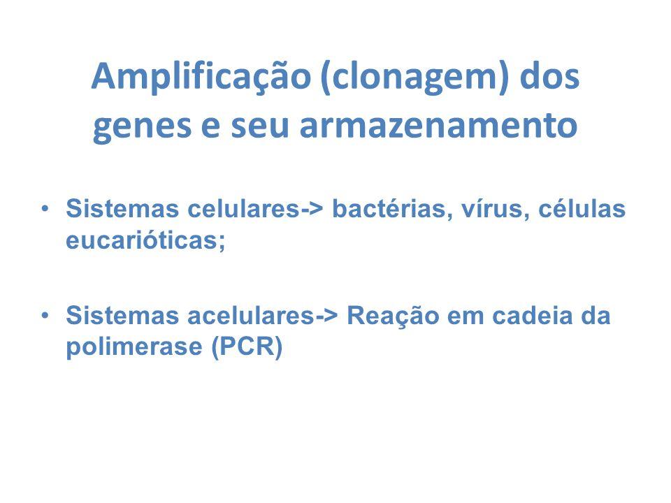 Amplificação (clonagem) dos genes e seu armazenamento Sistemas celulares-> bactérias, vírus, células eucarióticas; Sistemas acelulares-> Reação em cad