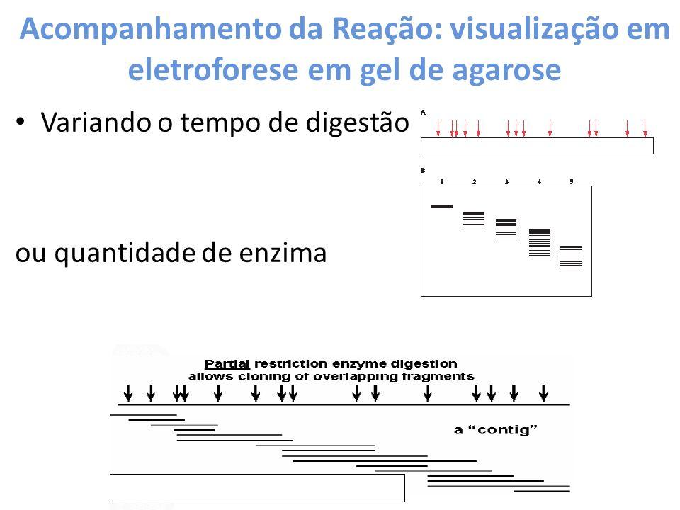 Acompanhamento da Reação: visualização em eletroforese em gel de agarose Variando o tempo de digestão ou quantidade de enzima