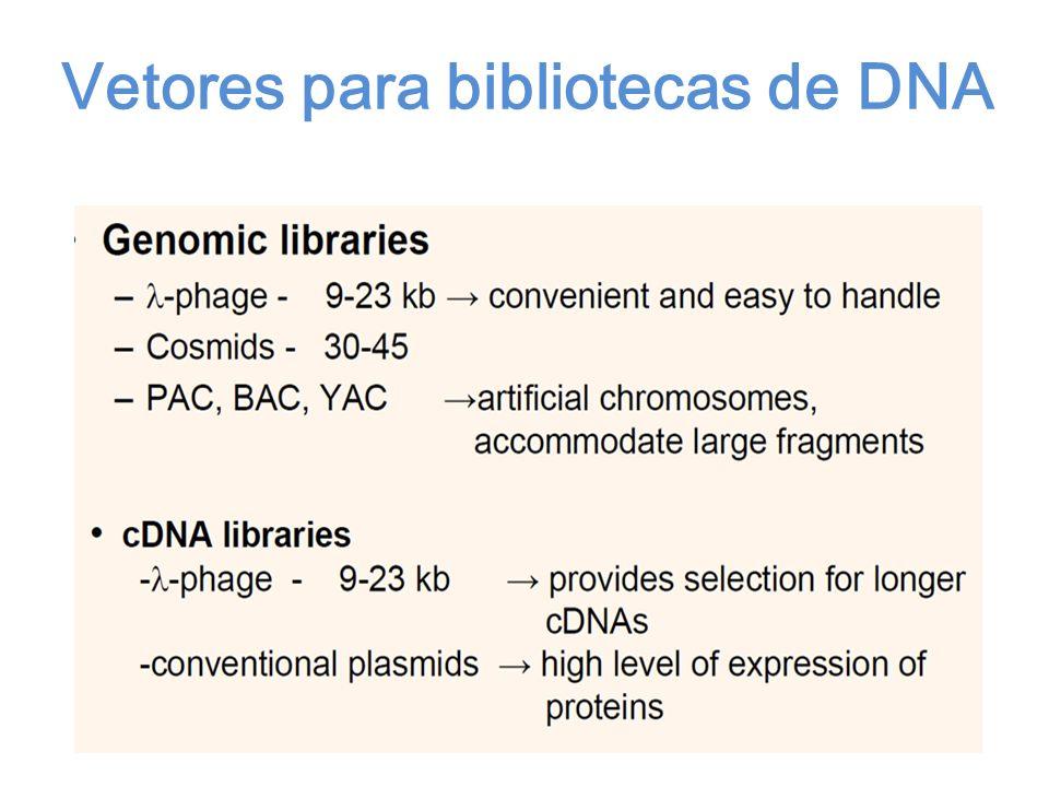 Vetores para bibliotecas de DNA