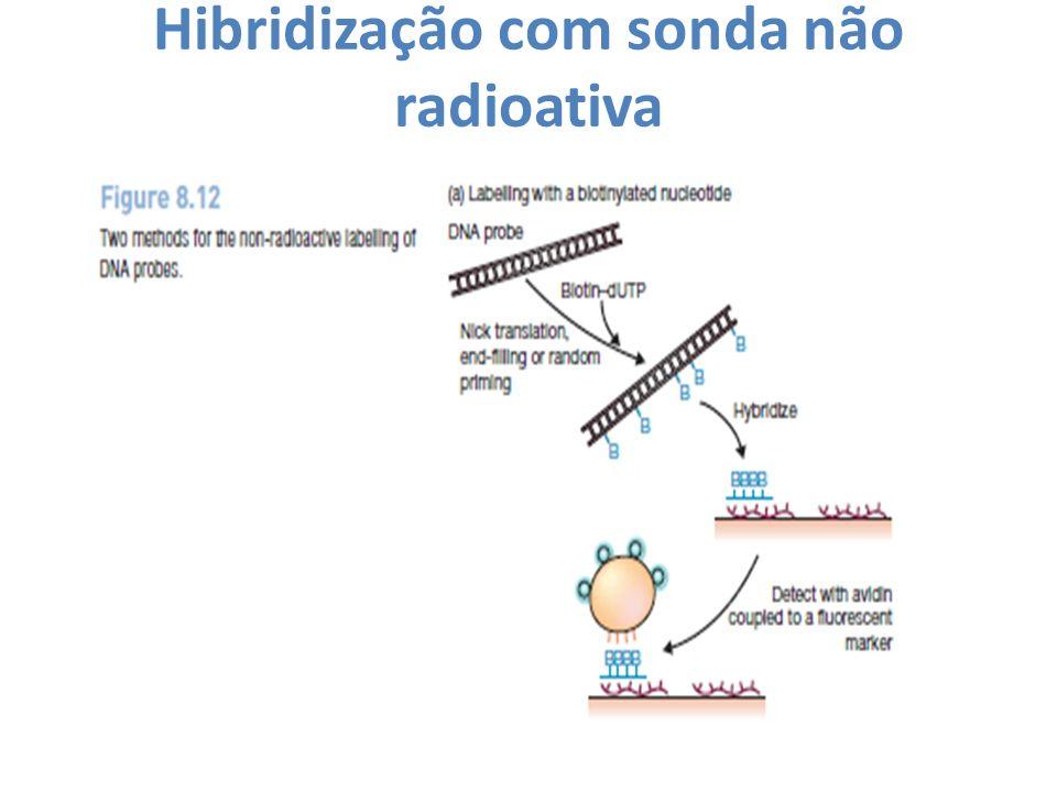 Hibridização com sonda não radioativa