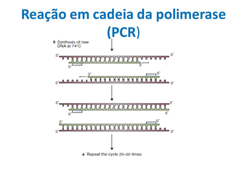 Síntese de cDNA oligo-dT anela na cauda poly-A.