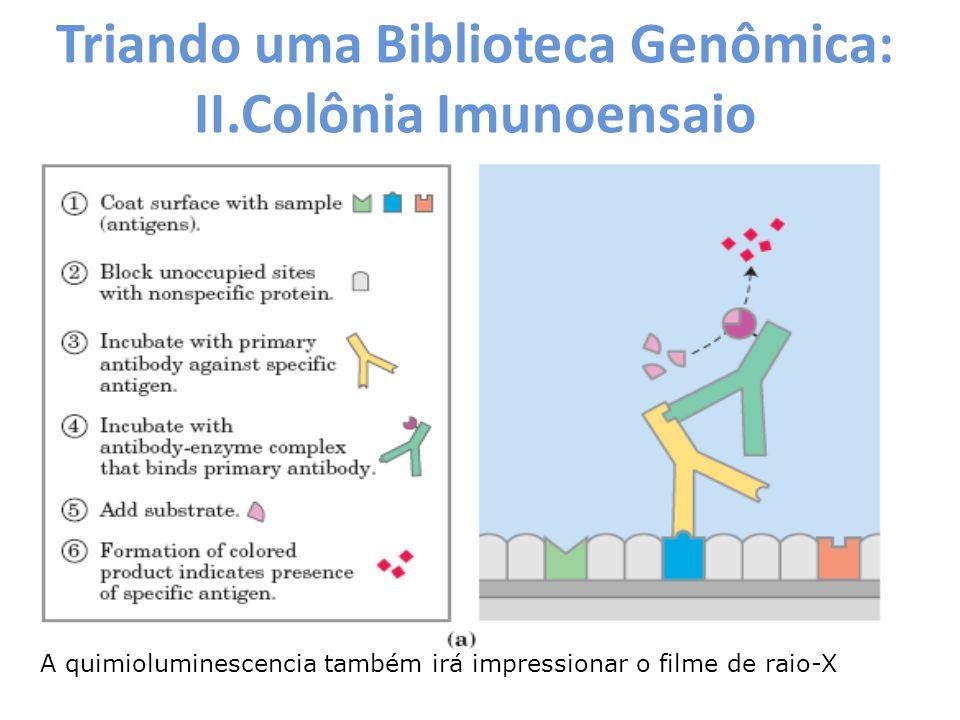 Triando uma Biblioteca Genômica: II.Colônia Imunoensaio A quimioluminescencia também irá impressionar o filme de raio-X