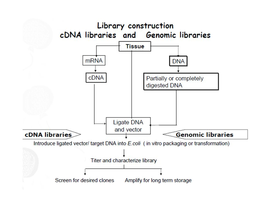 Biblioteca genômica como fazer?