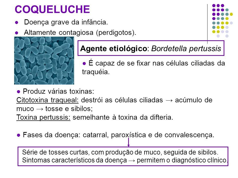 COQUELUCHE Doença grave da infância. Altamente contagiosa (perdigotos). Produz várias toxinas: Citotoxina traqueal: destrói as células ciliadas acúmul