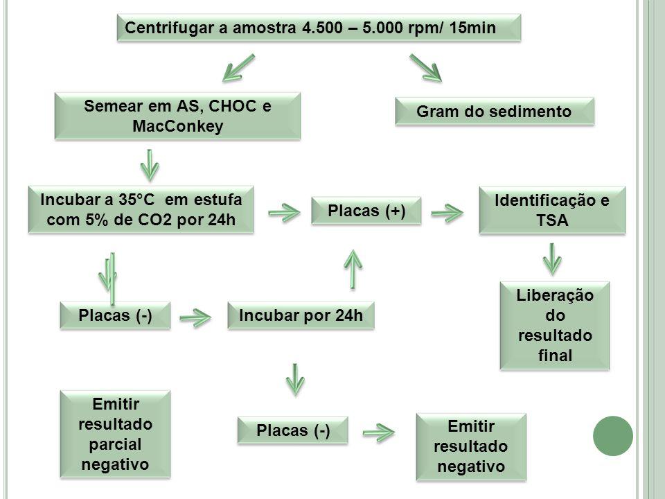 Centrifugar a amostra 4.500 – 5.000 rpm/ 15min Semear em AS, CHOC e MacConkey Gram do sedimentoIncubar a 35°C em estufa com 5% de CO2 por 24h Placas (