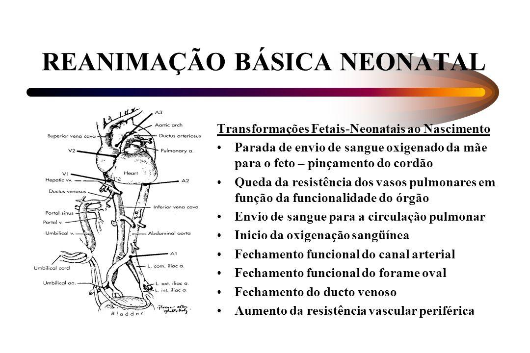 REANIMAÇÃO BÁSICA NEONATAL Transformações Fetais-Neonatais ao Nascimento Parada de envio de sangue oxigenado da mãe para o feto – pinçamento do cordão