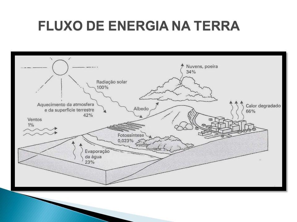 CADEIA ALIMENTAR E FLUXO ENERGÉTICO