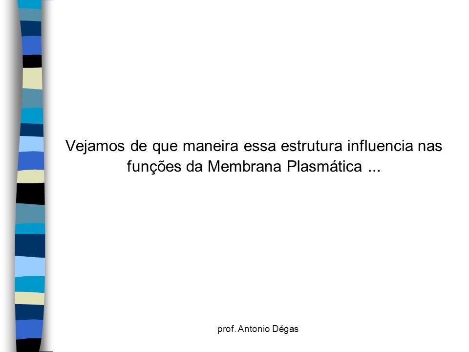 prof. Antonio Dégas Vejamos de que maneira essa estrutura influencia nas funções da Membrana Plasmática...