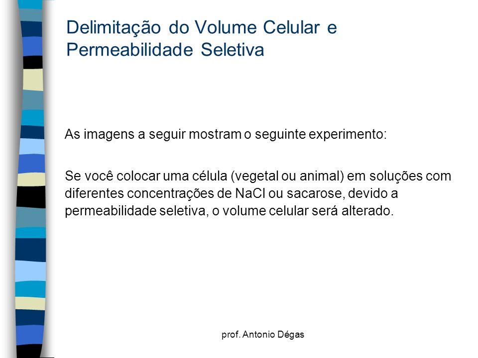 prof. Antonio Dégas Delimitação do Volume Celular e Permeabilidade Seletiva As imagens a seguir mostram o seguinte experimento: Se você colocar uma cé
