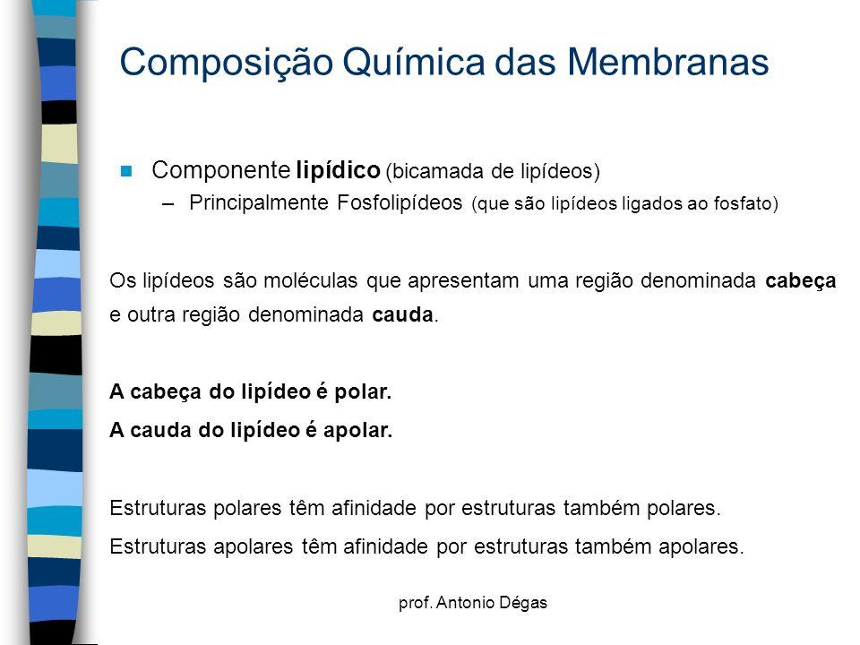 prof. Antonio Dégas Composição Química das Membranas Componente lipídico (bicamada de lipídeos) –Principalmente Fosfolipídeos (que são lipídeos ligado