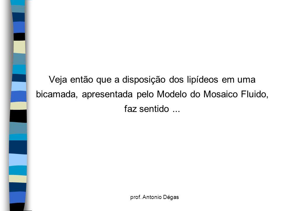 prof. Antonio Dégas Veja então que a disposição dos lipídeos em uma bicamada, apresentada pelo Modelo do Mosaico Fluido, faz sentido...