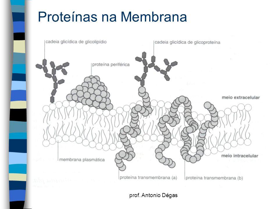 prof. Antonio Dégas Proteínas na Membrana