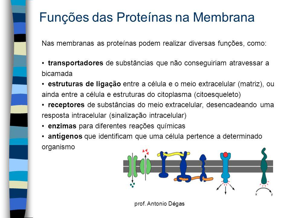 prof. Antonio Dégas Funções das Proteínas na Membrana Nas membranas as proteínas podem realizar diversas funções, como: transportadores de substâncias