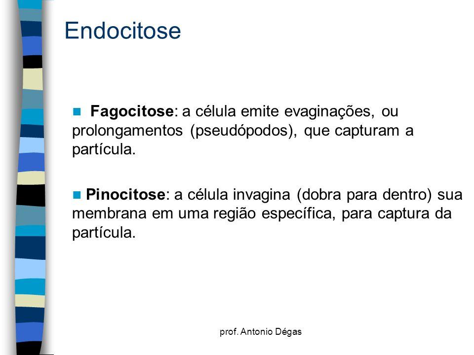 prof. Antonio Dégas Endocitose Fagocitose: a célula emite evaginações, ou prolongamentos (pseudópodos), que capturam a partícula. Pinocitose: a célula