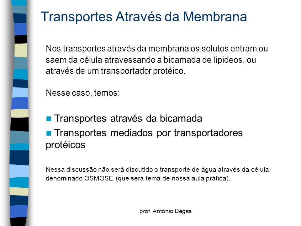 prof. Antonio Dégas Transportes Através da Membrana Nos transportes através da membrana os solutos entram ou saem da célula atravessando a bicamada de