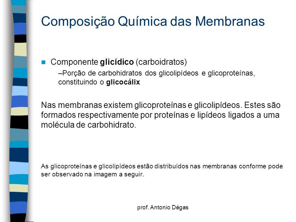 prof. Antonio Dégas Composição Química das Membranas Componente glicídico (carboidratos) –Porção de carbohidratos dos glicolipídeos e glicoproteínas,