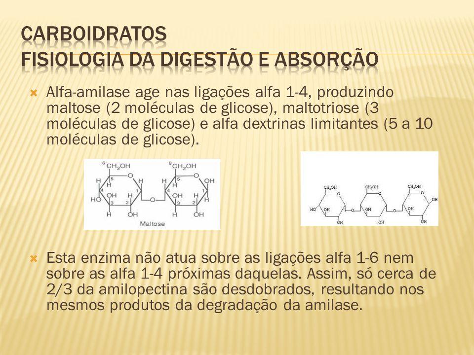 Alfa-amilase age nas ligações alfa 1-4, produzindo maltose (2 moléculas de glicose), maltotriose (3 moléculas de glicose) e alfa dextrinas limitantes (5 a 10 moléculas de glicose).