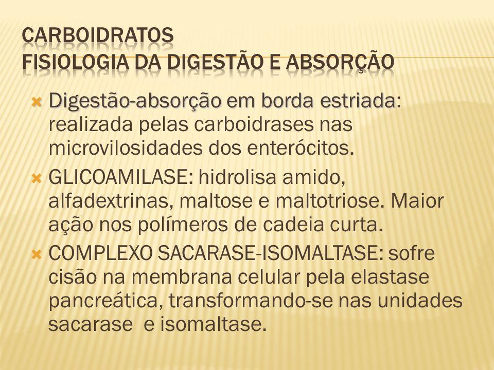 Digestão-absorção em borda estriada Digestão-absorção em borda estriada: realizada pelas carboidrases nas microvilosidades dos enterócitos.