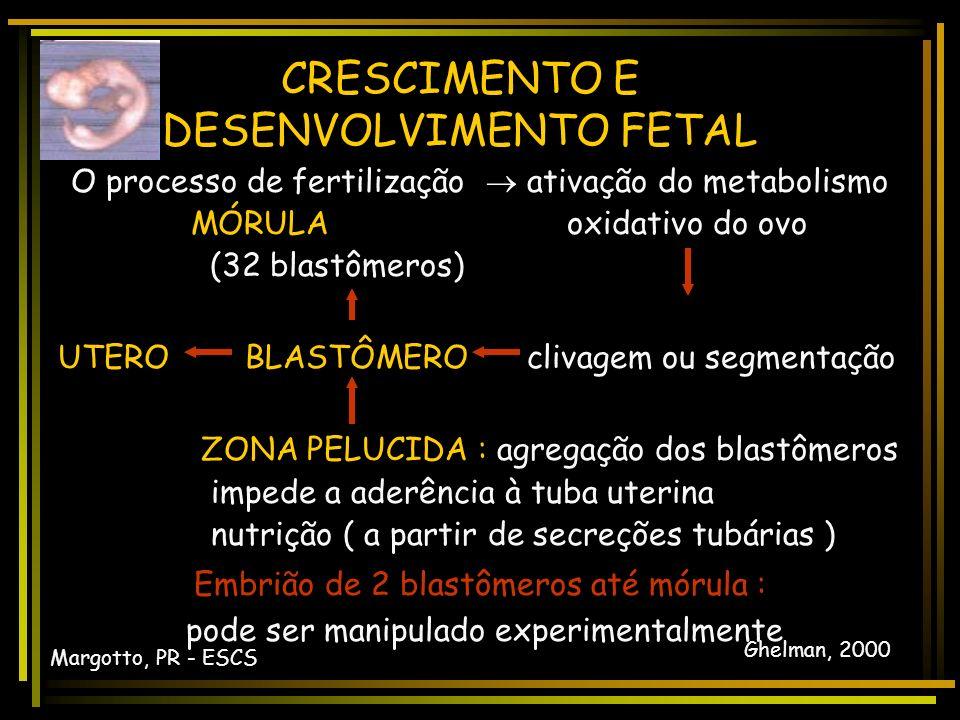 CRESCIMENTO E DESENVOLVIMENTO FETAL CRESCIMENTO E DESENVOLVIMENTO OVO COM DOIS PRONÚCLEOS Margotto, PR - ESCS Ghelman, 2000
