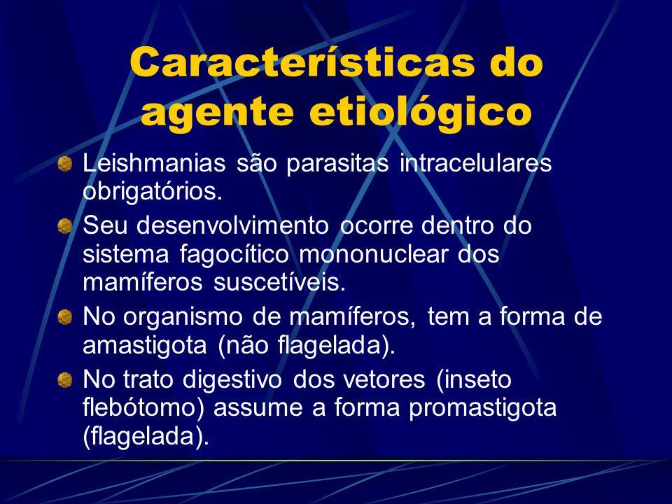 Características do agente etiológico Leishmanias são parasitas intracelulares obrigatórios. Seu desenvolvimento ocorre dentro do sistema fagocítico mo