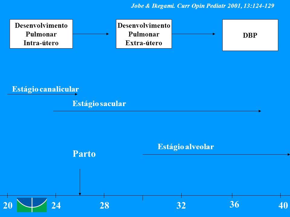 Desenvolvimento Pulmonar Intra-útero Desenvolvimento Pulmonar Extra-útero DBP Estágio canalicular 20242832 36 40 Estágio sacular Estágio alveolar Part
