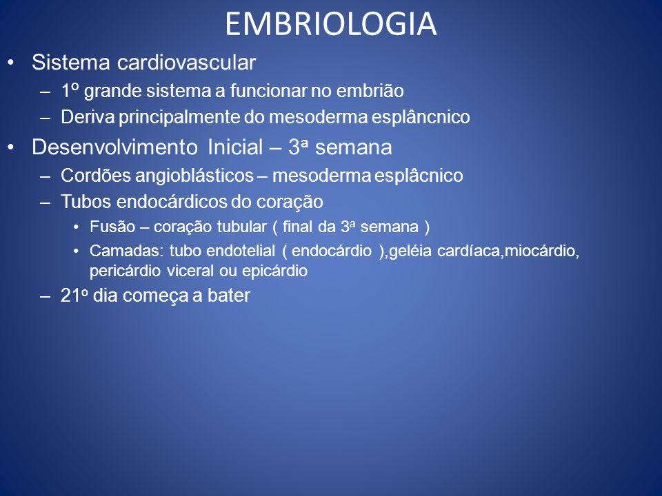 EMBRIOLOGIA Sistema cardiovascular –1 o grande sistema a funcionar no embrião –Deriva principalmente do mesoderma esplâncnico Desenvolvimento Inicial