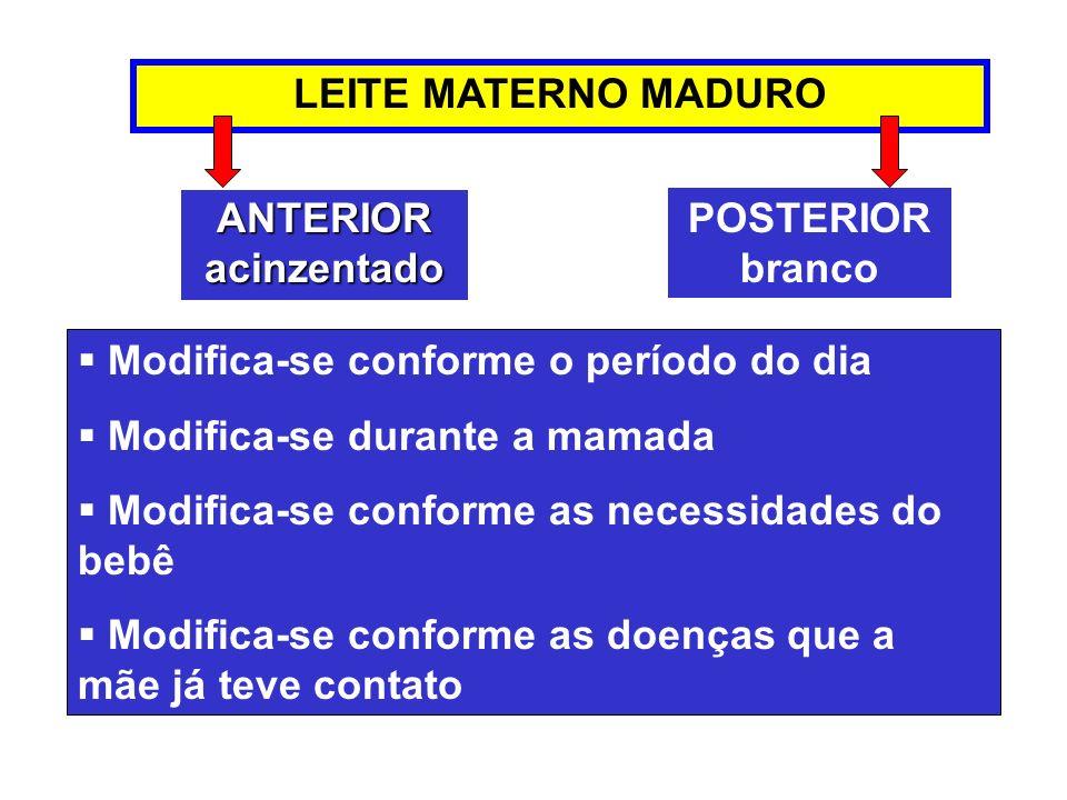 LEITE MATERNO MADURO Modifica-se conforme o período do dia Modifica-se durante a mamada Modifica-se conforme as necessidades do bebê Modifica-se confo
