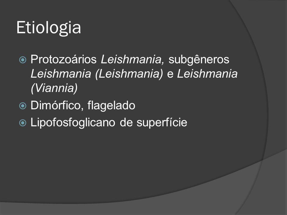 Etiologia Protozoários Leishmania, subgêneros Leishmania (Leishmania) e Leishmania (Viannia) Dimórfico, flagelado Lipofosfoglicano de superfície