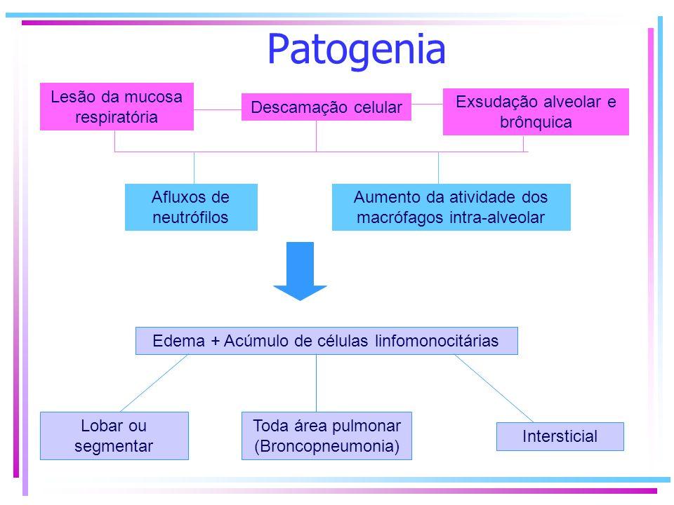 Patogenia Geralmente atinge o sítio pelas vias aéreas, ocasionalmente pode ocorrer por via hematogênica ou linfática; Lesão da mucosa respiratória Des