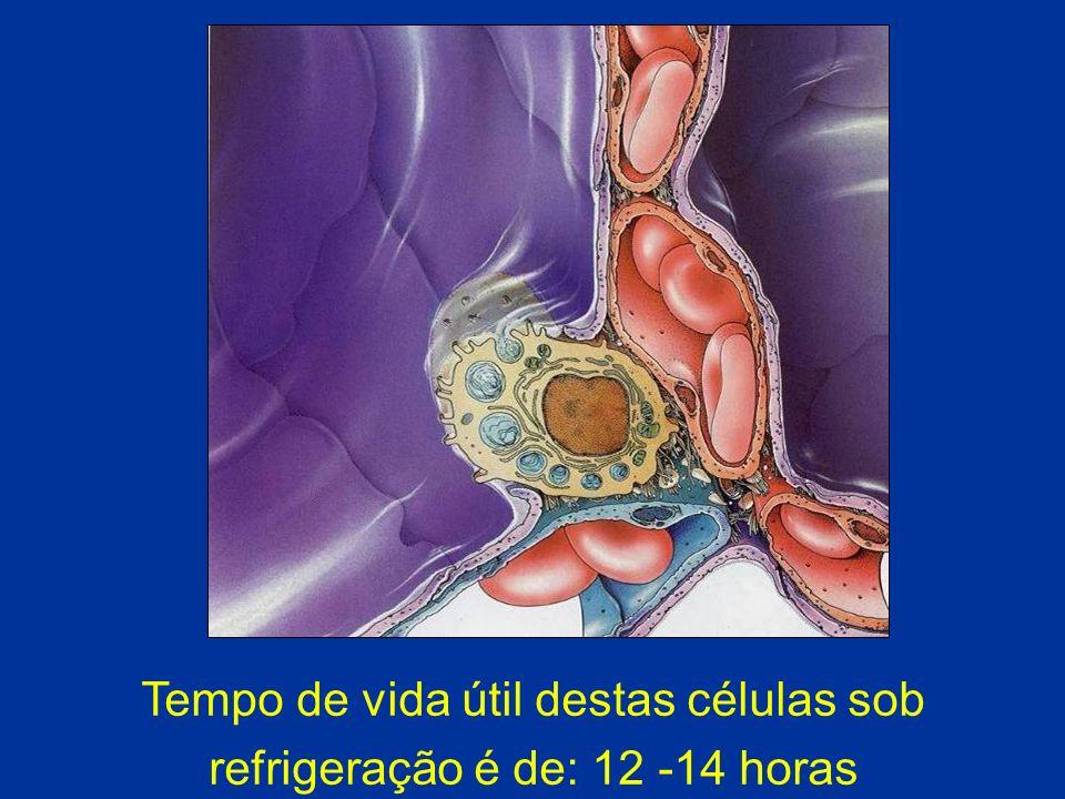 Tempo de vida útil destas células sob refrigeração é de: 12 -14 horas