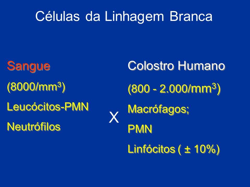 Células da Linhagem Branca Sangue (8000/mm 3 ) Leucócitos-PMN Neutrófilos Sangue (8000/mm 3 ) Leucócitos-PMN Neutrófilos Colostro Humano (800 - 2.000/