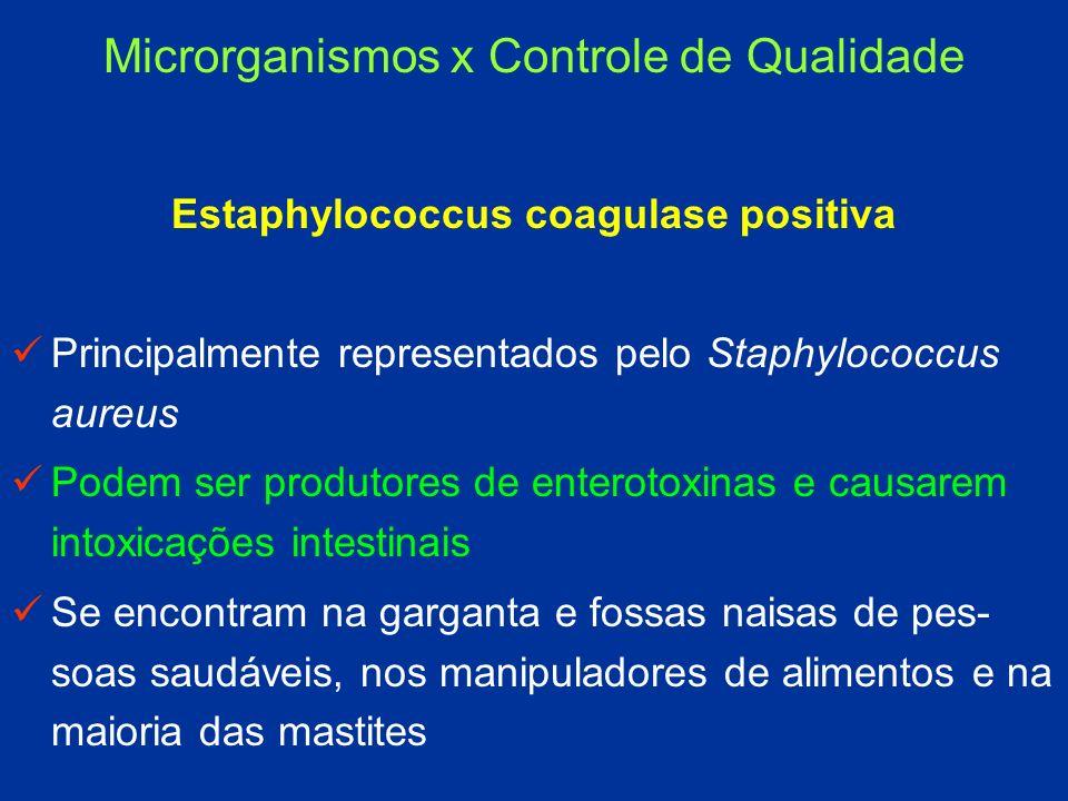 Estaphylococcus coagulase positiva Principalmente representados pelo Staphylococcus aureus Podem ser produtores de enterotoxinas e causarem intoxicaçõ