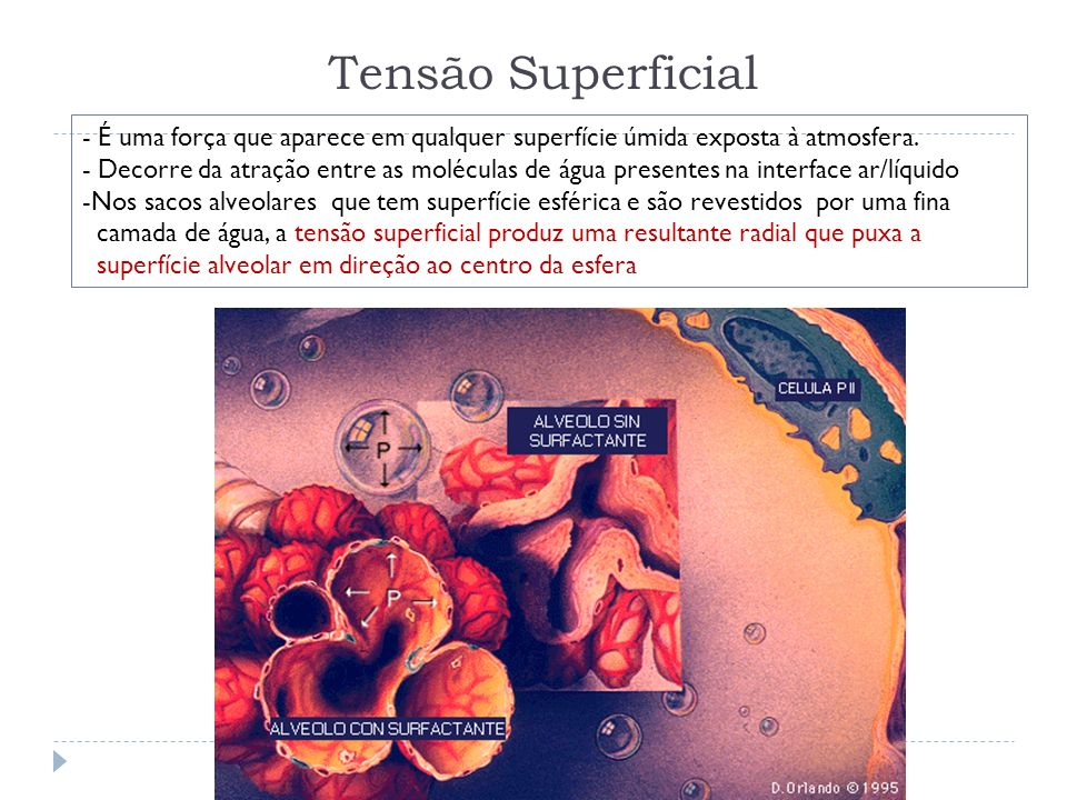 Tensão Superficial - É uma força que aparece em qualquer superfície úmida exposta à atmosfera. - Decorre da atração entre as moléculas de água present