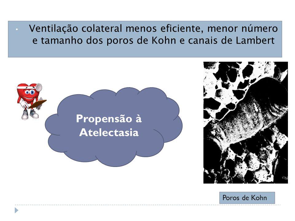 Ventilação colateral menos eficiente, menor número e tamanho dos poros de Kohn e canais de Lambert Poros de Kohn Propensão à Atelectasia