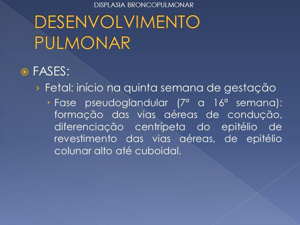 FASES: Fetal: início na quinta semana de gestação Fase pseudoglandular (7ª a 16ª semana): formação das vias aéreas de condução, diferenciação centrípe