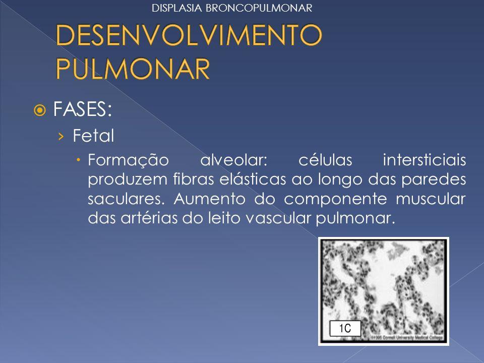 FASES: Fetal Formação alveolar: células intersticiais produzem fibras elásticas ao longo das paredes saculares. Aumento do componente muscular das art