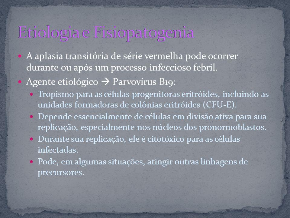 A aplasia transitória de série vermelha pode ocorrer durante ou após um processo infeccioso febril. Agente etiológico Parvovírus B19: Tropismo para as