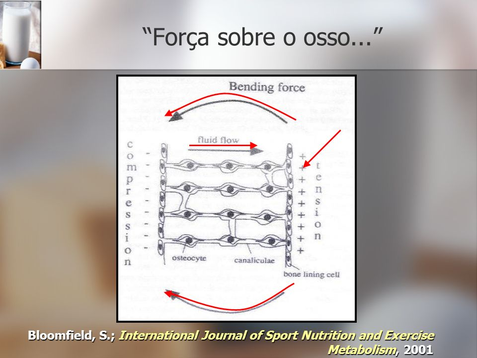 Força sobre o osso... Bloomfield, S.; International Journal of Sport Nutrition and Exercise Metabolism, 2001