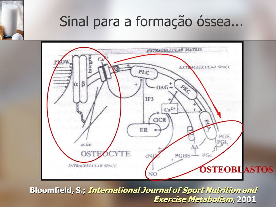 Sinal para a formação óssea... Bloomfield, S.; International Journal of Sport Nutrition and Exercise Metabolism, 2001 OSTEOBLASTOS