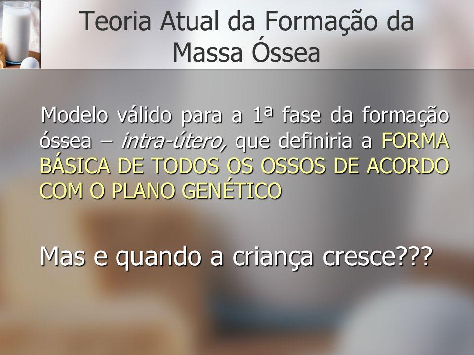 Teoria Atual da Formação da Massa Óssea Modelo válido para a 1ª fase da formação óssea – intra-útero, que definiria a FORMA BÁSICA DE TODOS OS OSSOS D