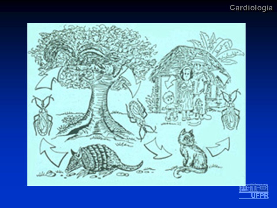Cardiologia Doença de Chagas Fase Crônica DIAGNÓSTICO LABORATORIAL II Conduta B) Testes sorológicos (detecção de IgG) Fixação de complemento Guerreiro e Machado 1913 Precipitação Aglutinação Aglutinação direta Aglutinação do látex Hemoaglutinação Imunofluorescência Enzima imunoensaio - ELISA DIAGNÓSTICO LABORATORIAL II Conduta B) Testes sorológicos (detecção de IgG) Fixação de complemento Guerreiro e Machado 1913 Precipitação Aglutinação Aglutinação direta Aglutinação do látex Hemoaglutinação Imunofluorescência Enzima imunoensaio - ELISA