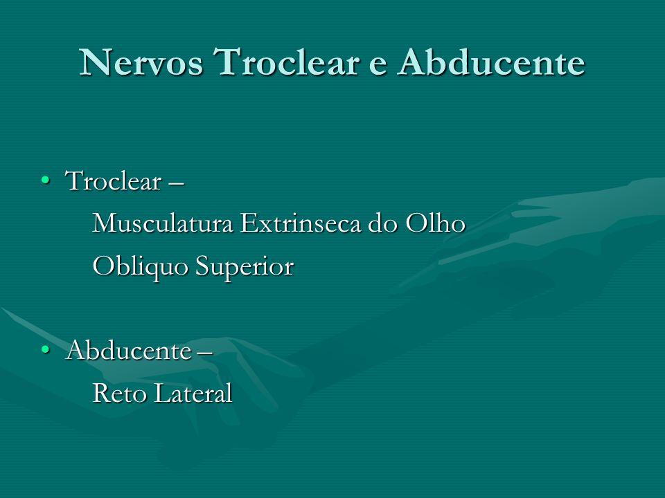 Nervos Troclear e Abducente Troclear –Troclear – Musculatura Extrinseca do Olho Musculatura Extrinseca do Olho Obliquo Superior Obliquo Superior Abduc