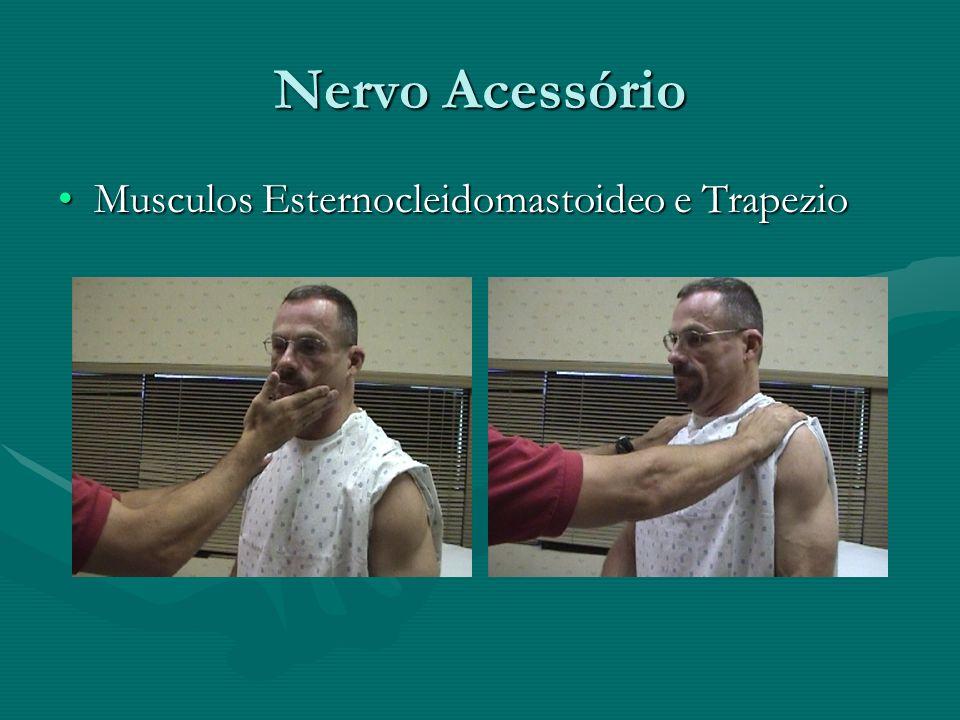 Nervo Acessório Musculos Esternocleidomastoideo e TrapezioMusculos Esternocleidomastoideo e Trapezio