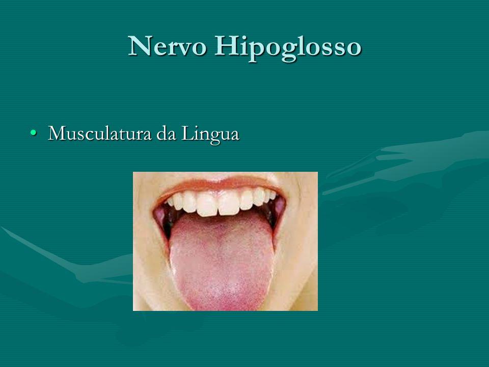 Nervo Hipoglosso Musculatura da LinguaMusculatura da Lingua