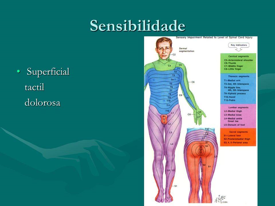Sensibilidade SuperficialSuperficial tactil tactil dolorosa dolorosa