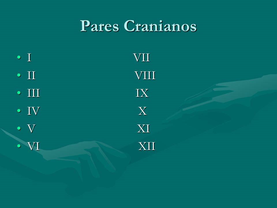 Pares Cranianos I VIII VII II VIIIII VIII III IXIII IX IV XIV X V XIV XI VI XIIVI XII