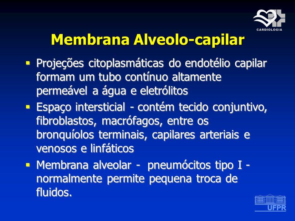 Membrana Alveolo-capilar Projeções citoplasmáticas do endotélio capilar formam um tubo contínuo altamente permeável a água e eletrólitos Projeções cit