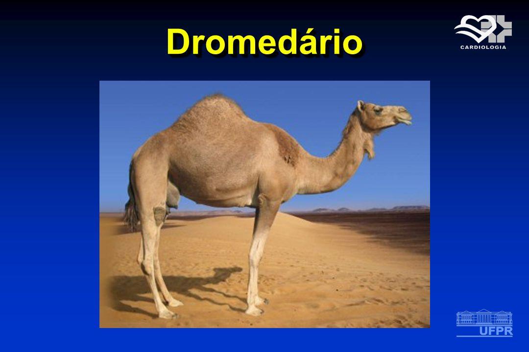 DromedárioDromedário